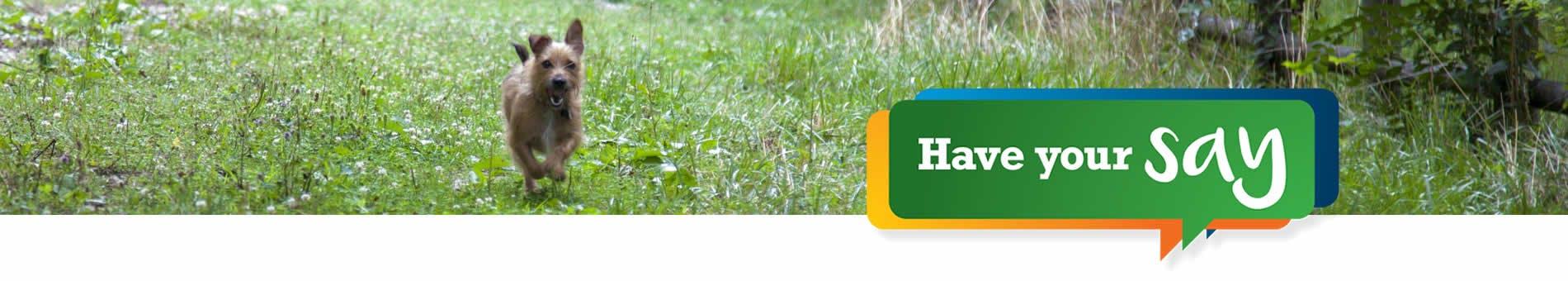 dog running in a green grassy field