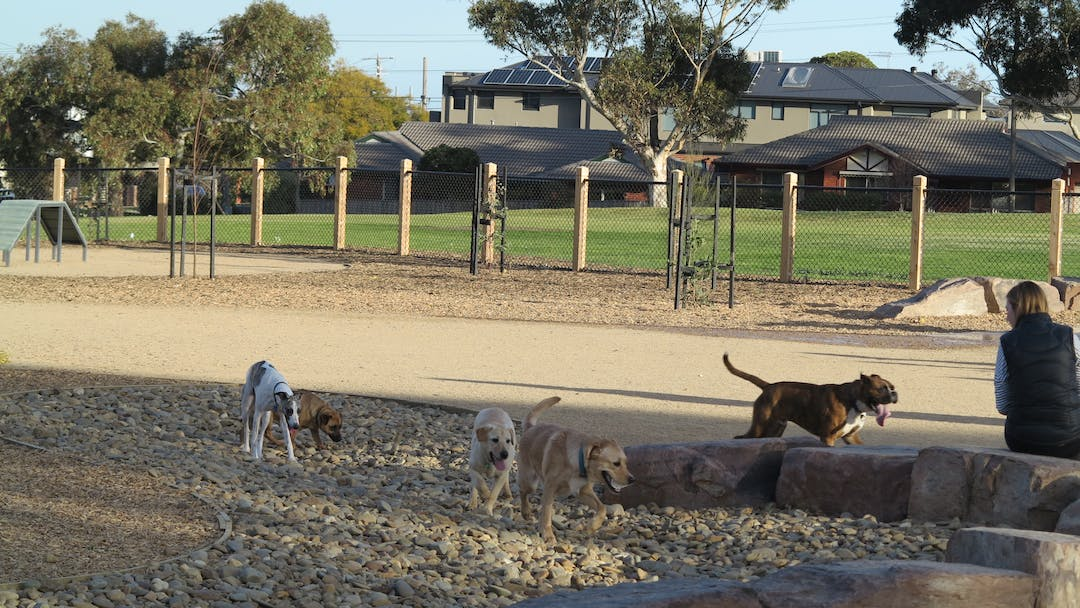 Would you like a new Dog Park?