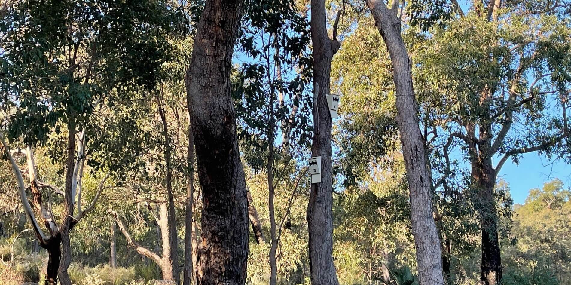Microbats boxes at Mundy Regional Park located in Lesmurdie