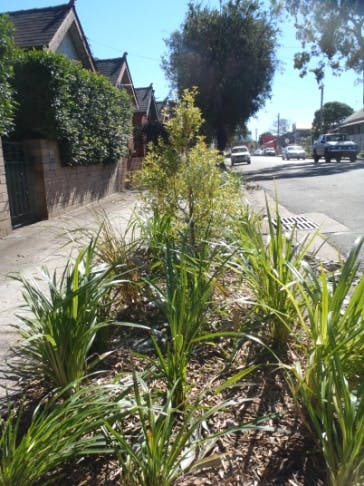 Example Newly Planted Verge