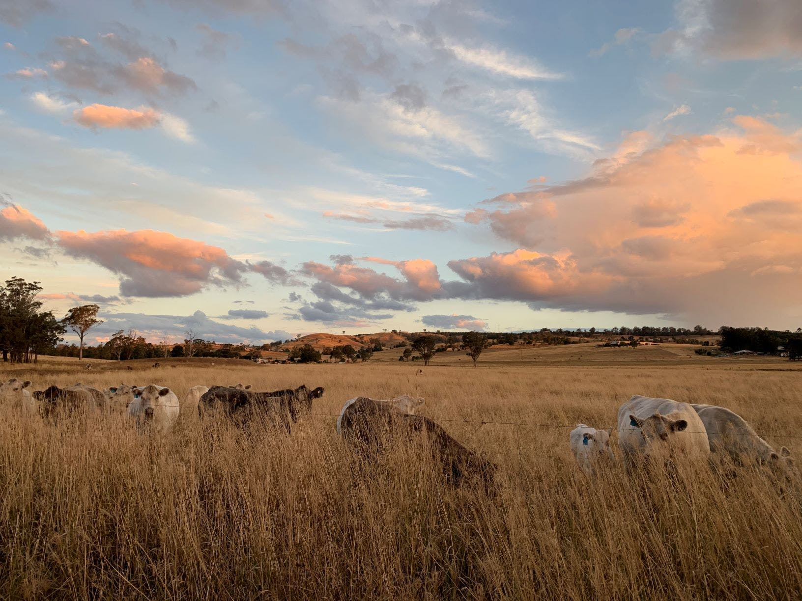 Renee Edge, Gillies' Farm Pechey 2020 (Highly Commended, Landscape Category)