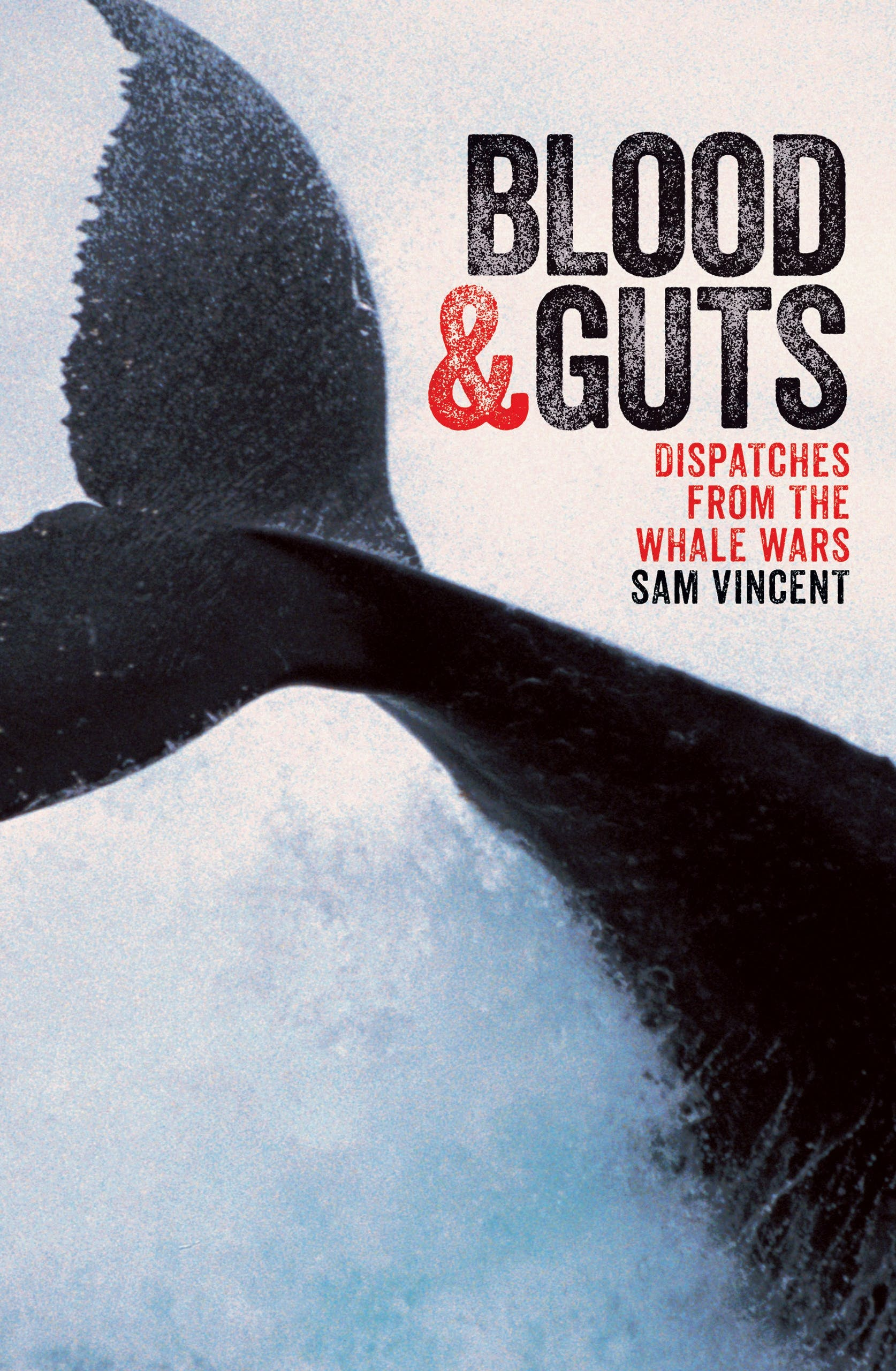 Blood And Guts Dispatches From The Whale Wars