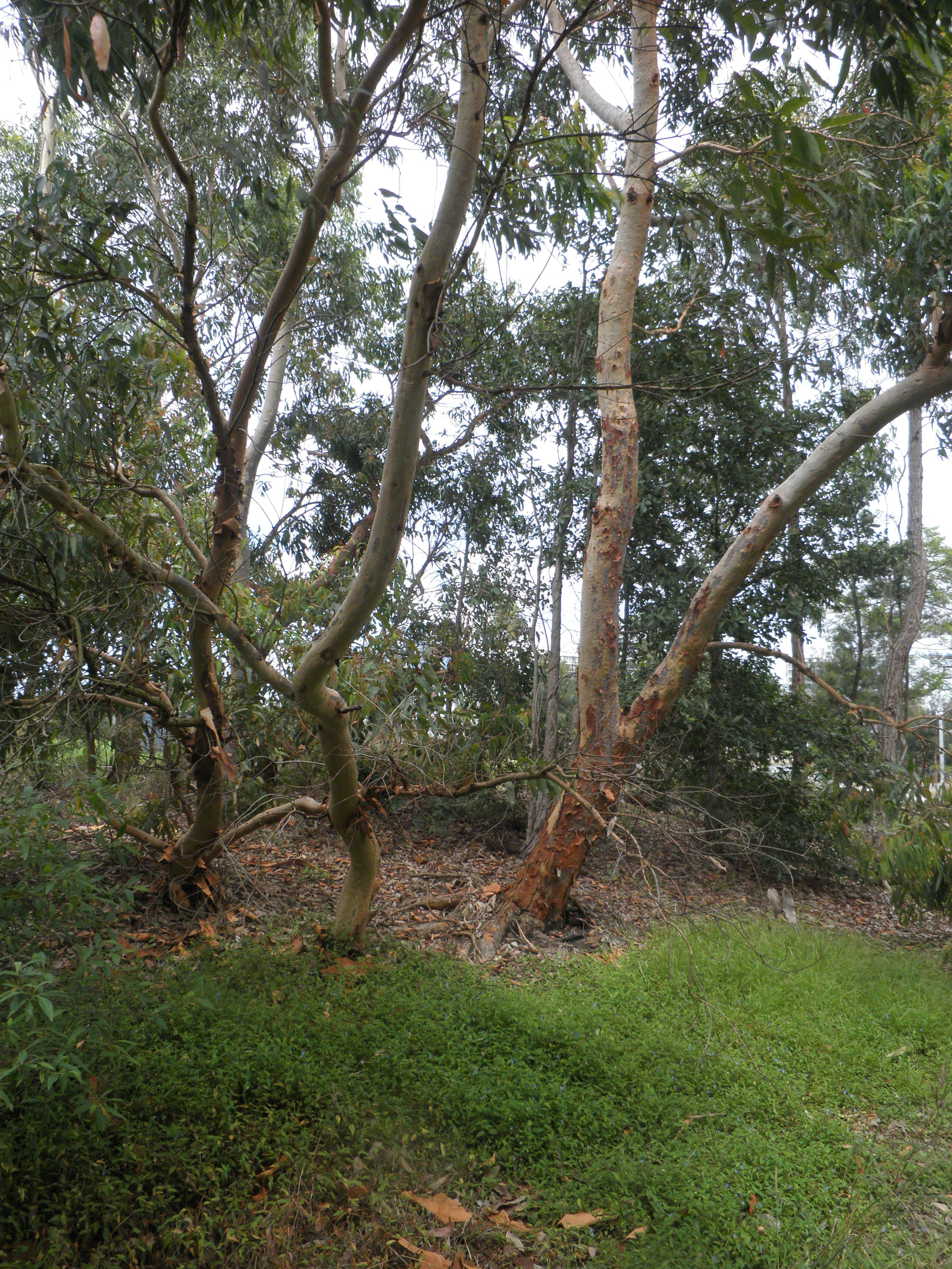 tree image - cooks river valley garden