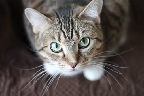 Proposed New Cats Local Law 2016