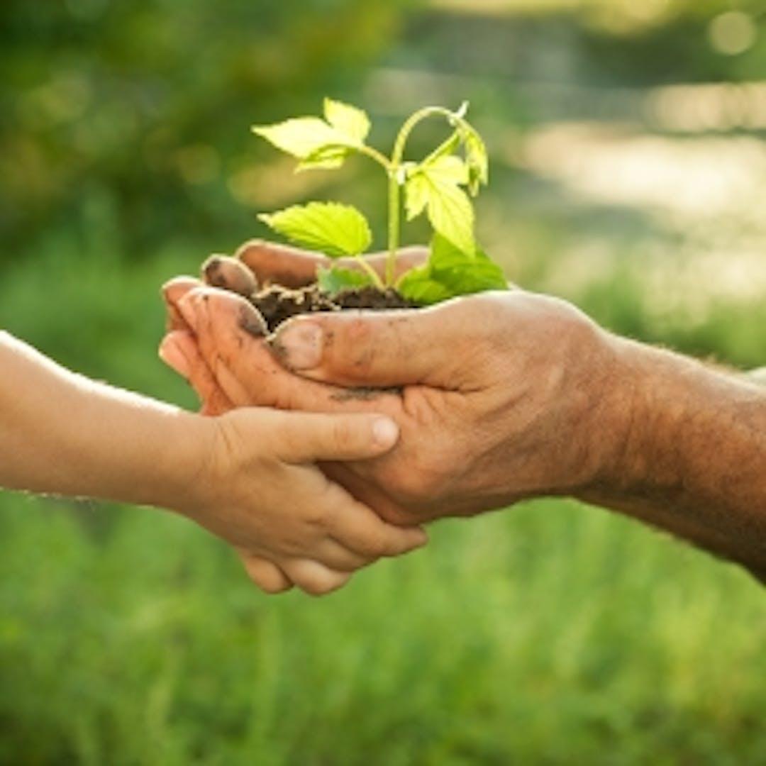 The City of Kalamunda is seeking community representatives for the Kalamunda Environmental Advisory Committee.