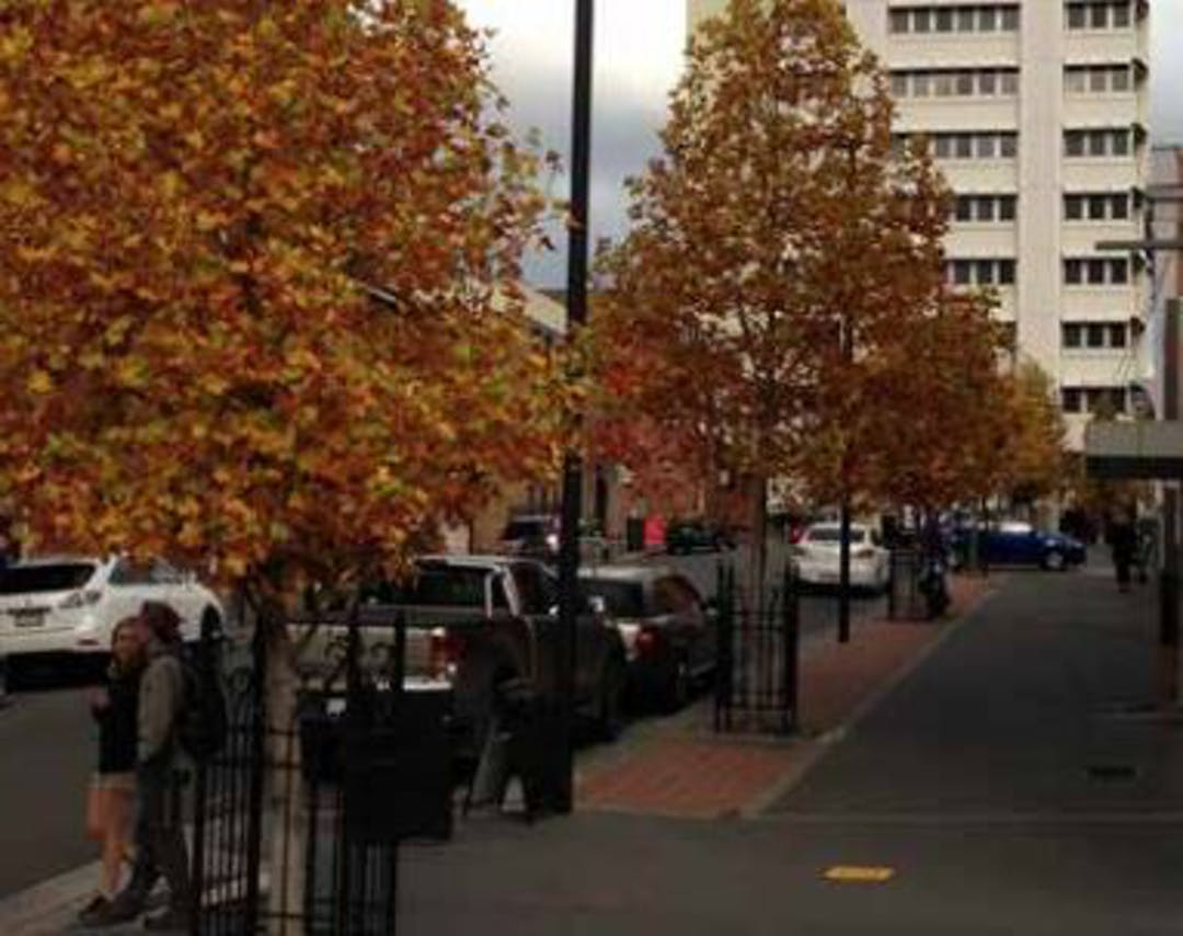 Street trees in Hobart - we want your input