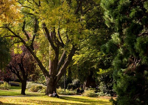 Street Tree Image