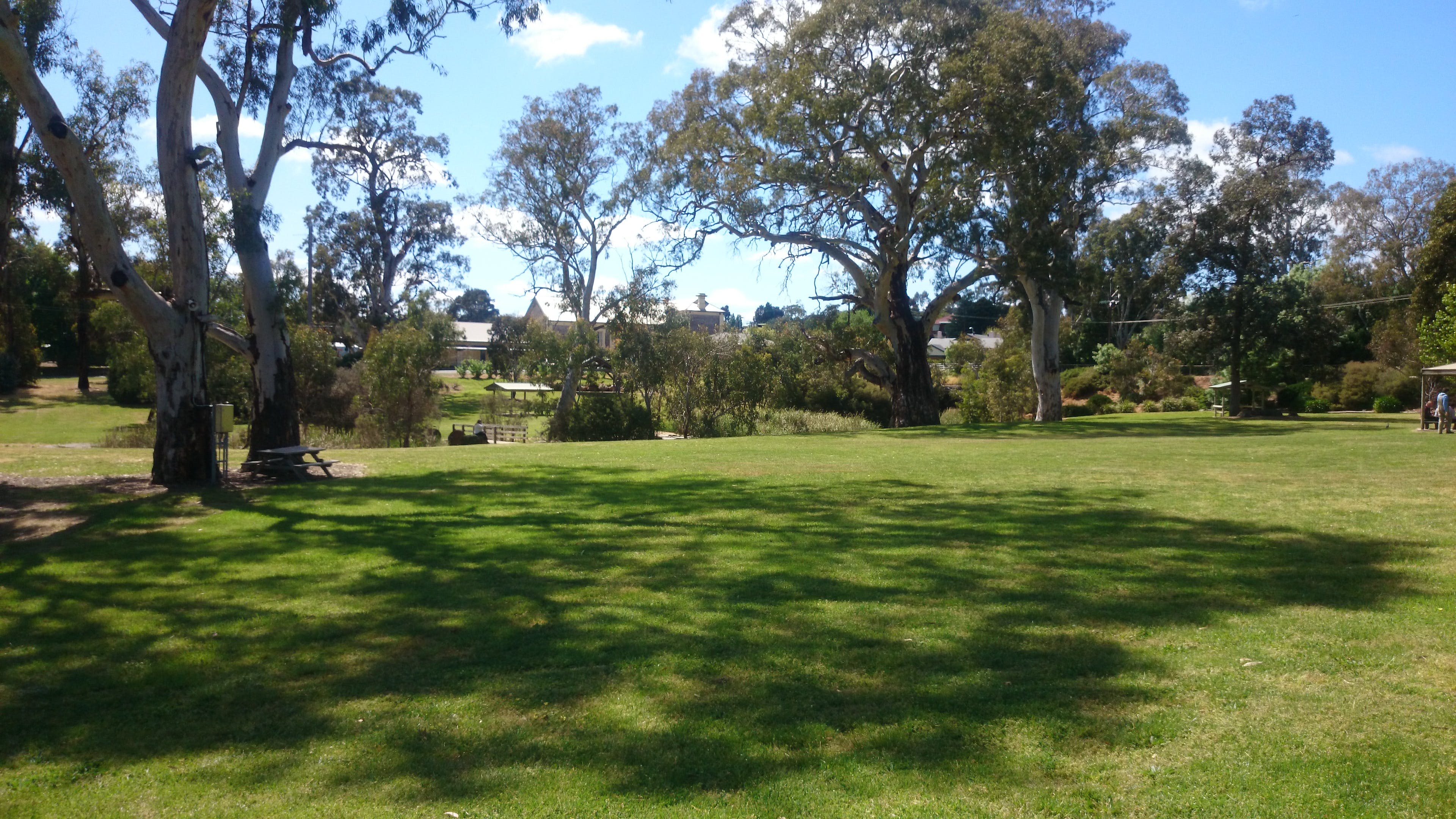 Parks and ovals   federation park   trees