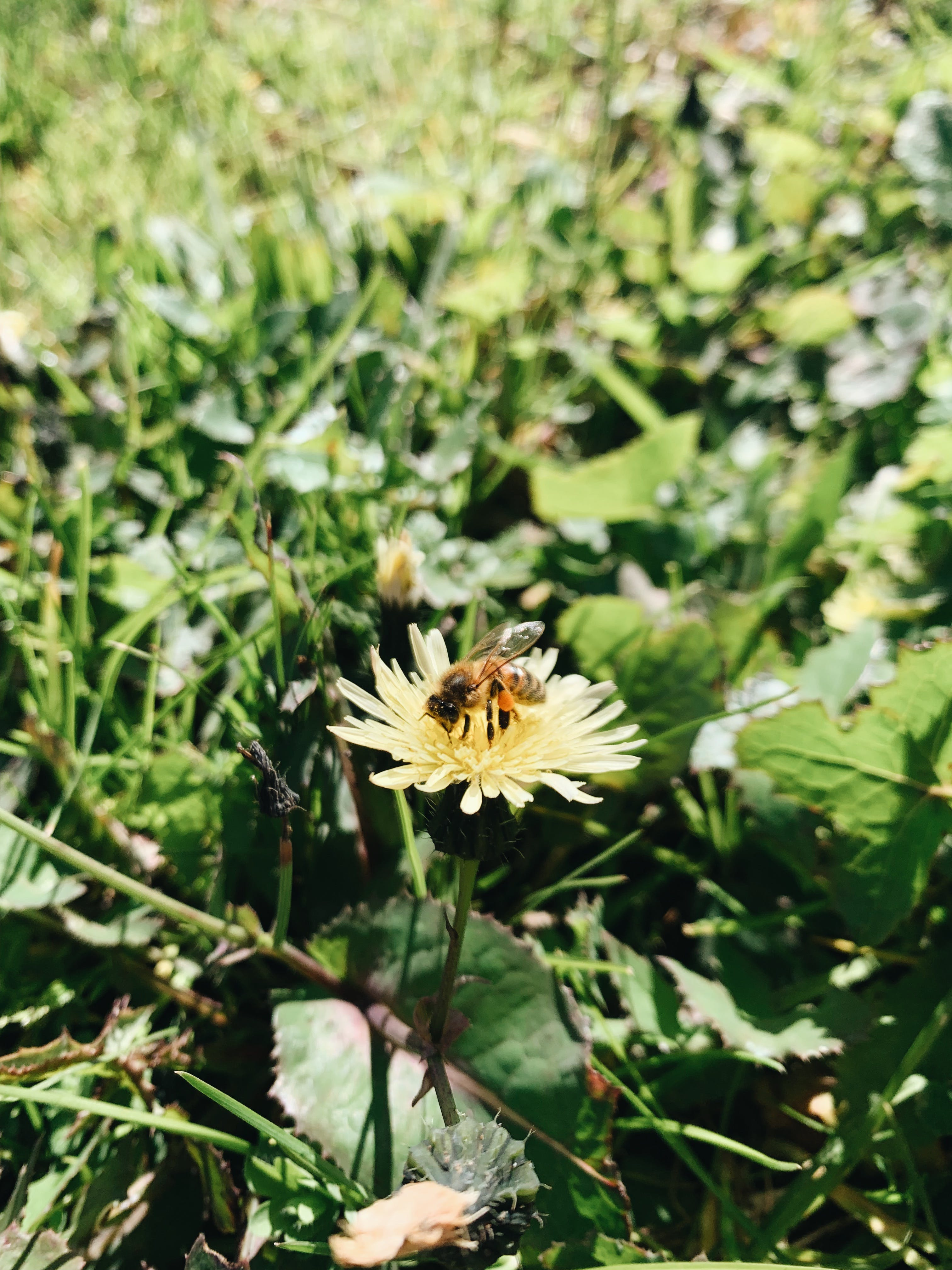 A Bee Enjoying the Spring Flowers