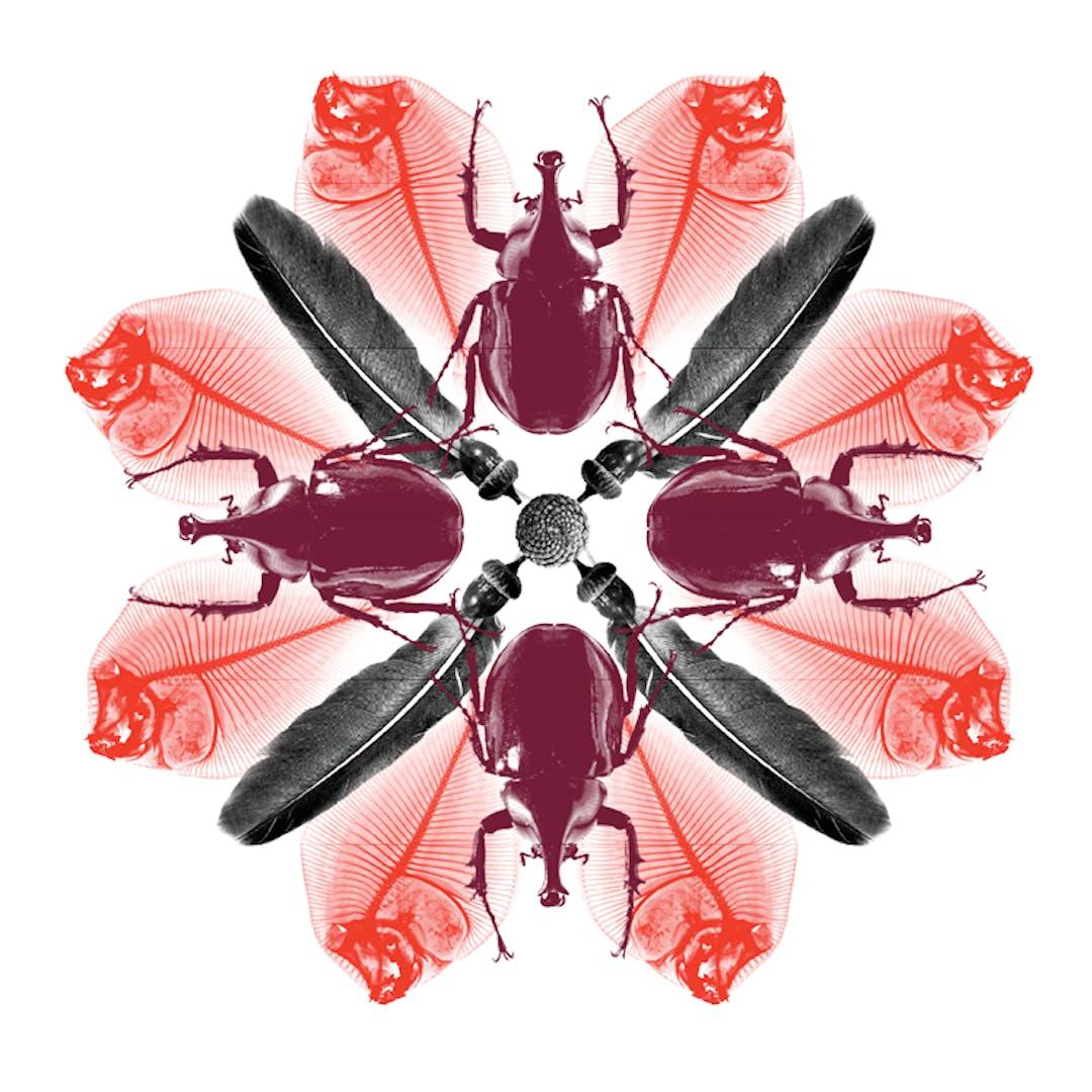 departmental bug biosphere