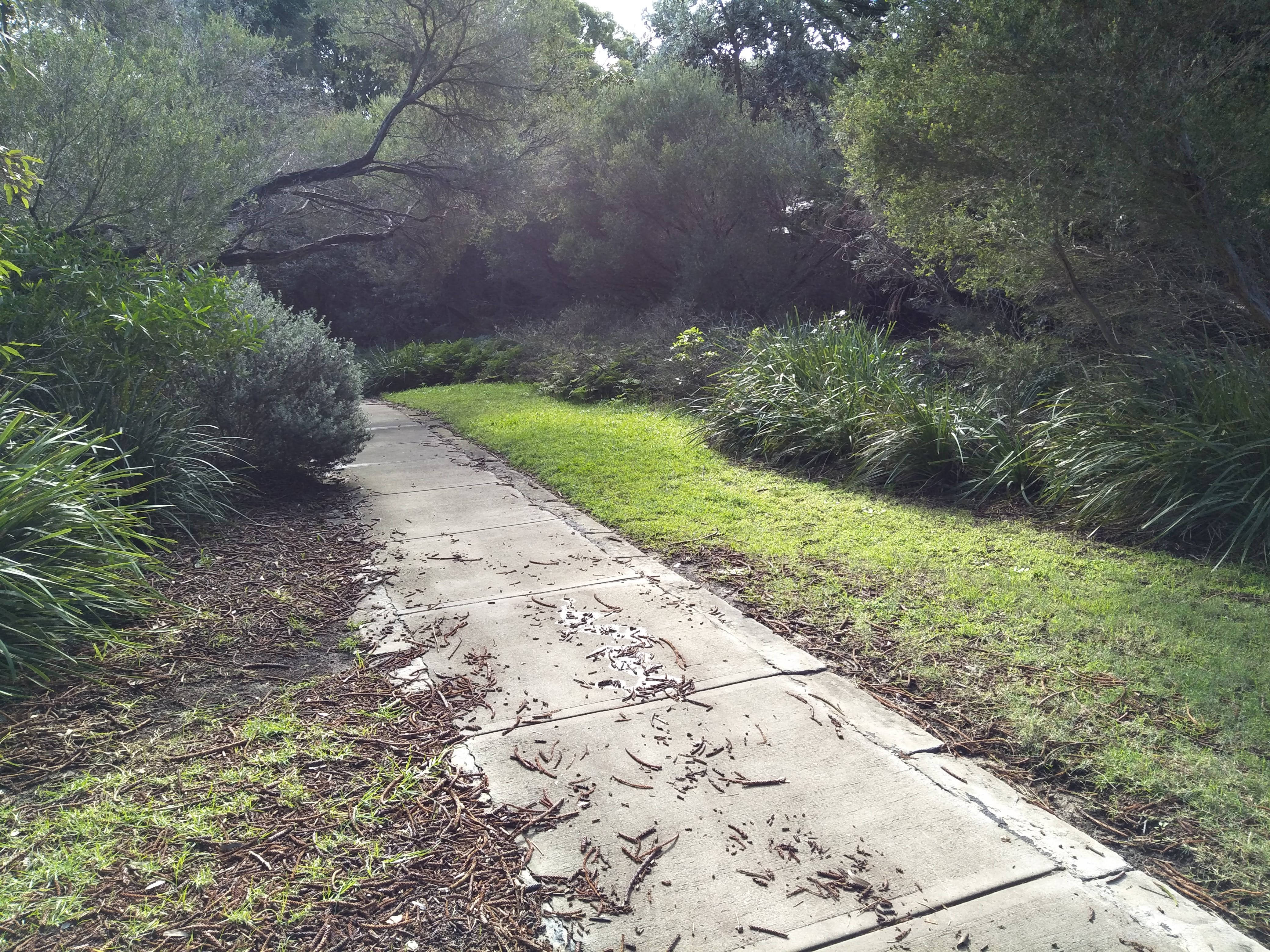 Where the path from the Don Ritchie Grove and the tramway path route will meet