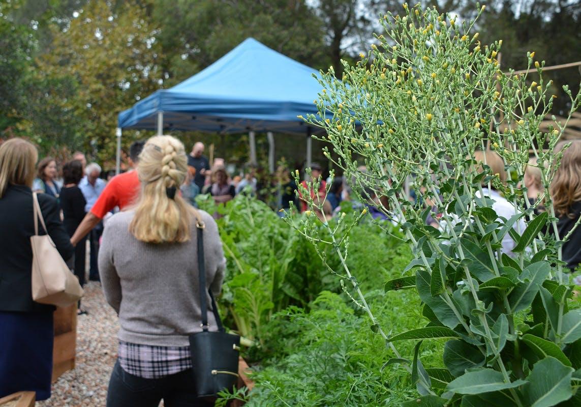 Anzac Park Community Garden opening