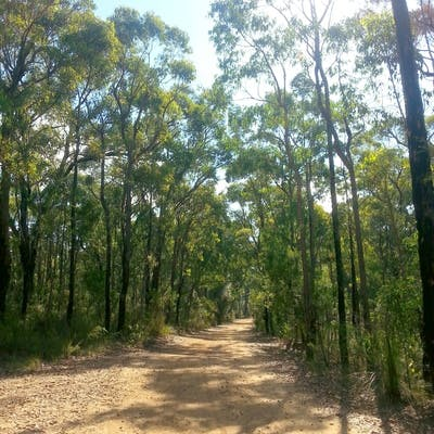 Being able to freely go for a walk or bike ride into the bush and experiencing the flora and fauna around the fire-trails.