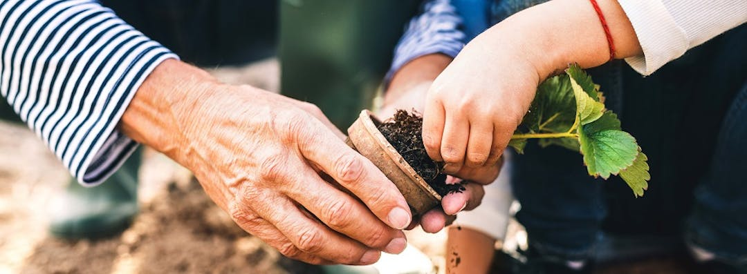 Close up of hands potting plant