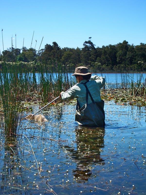 Improving catchment health, Glenbrook Lagoon