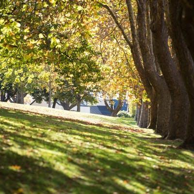 Hobart trees