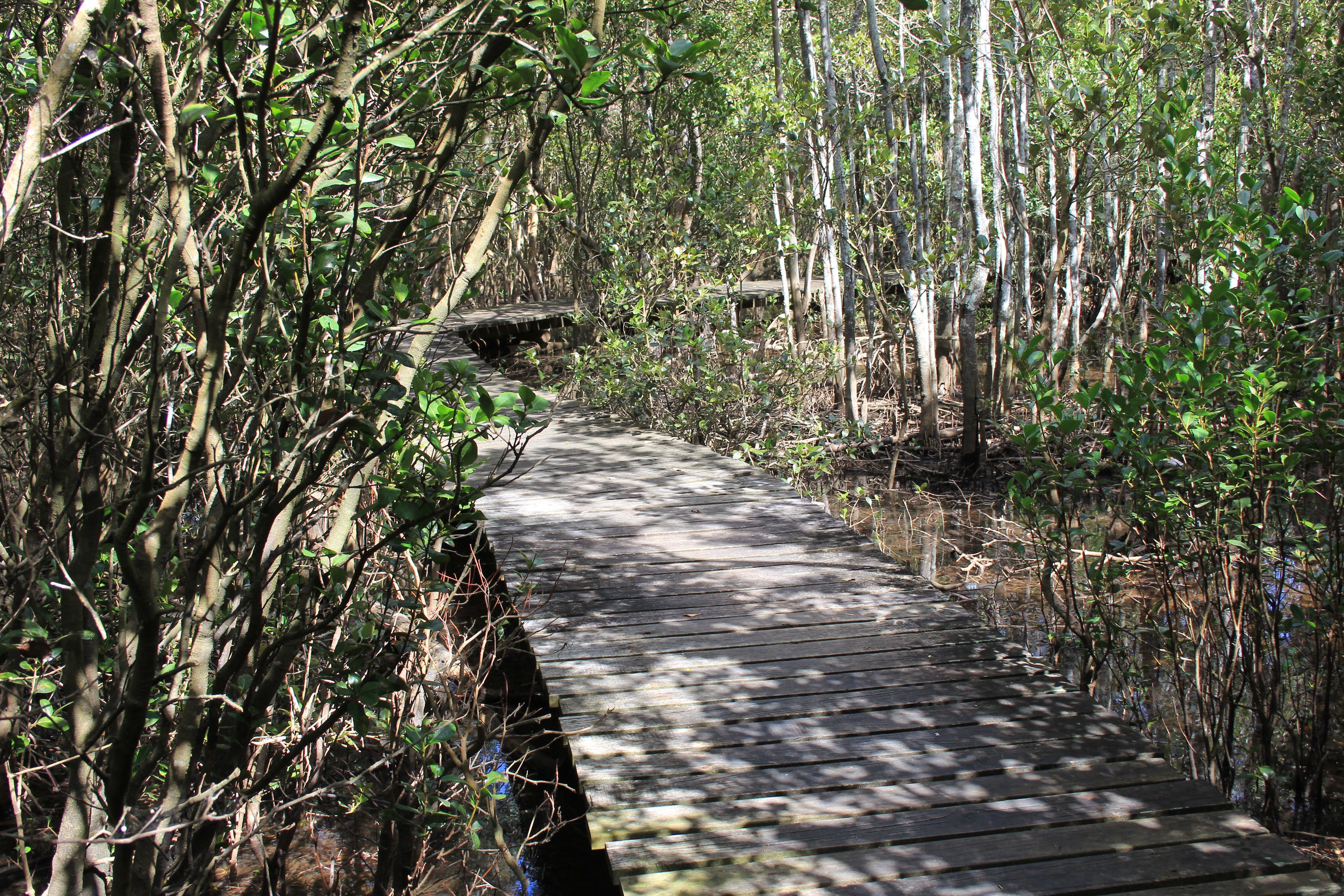 Kooloonbung Creek walking track