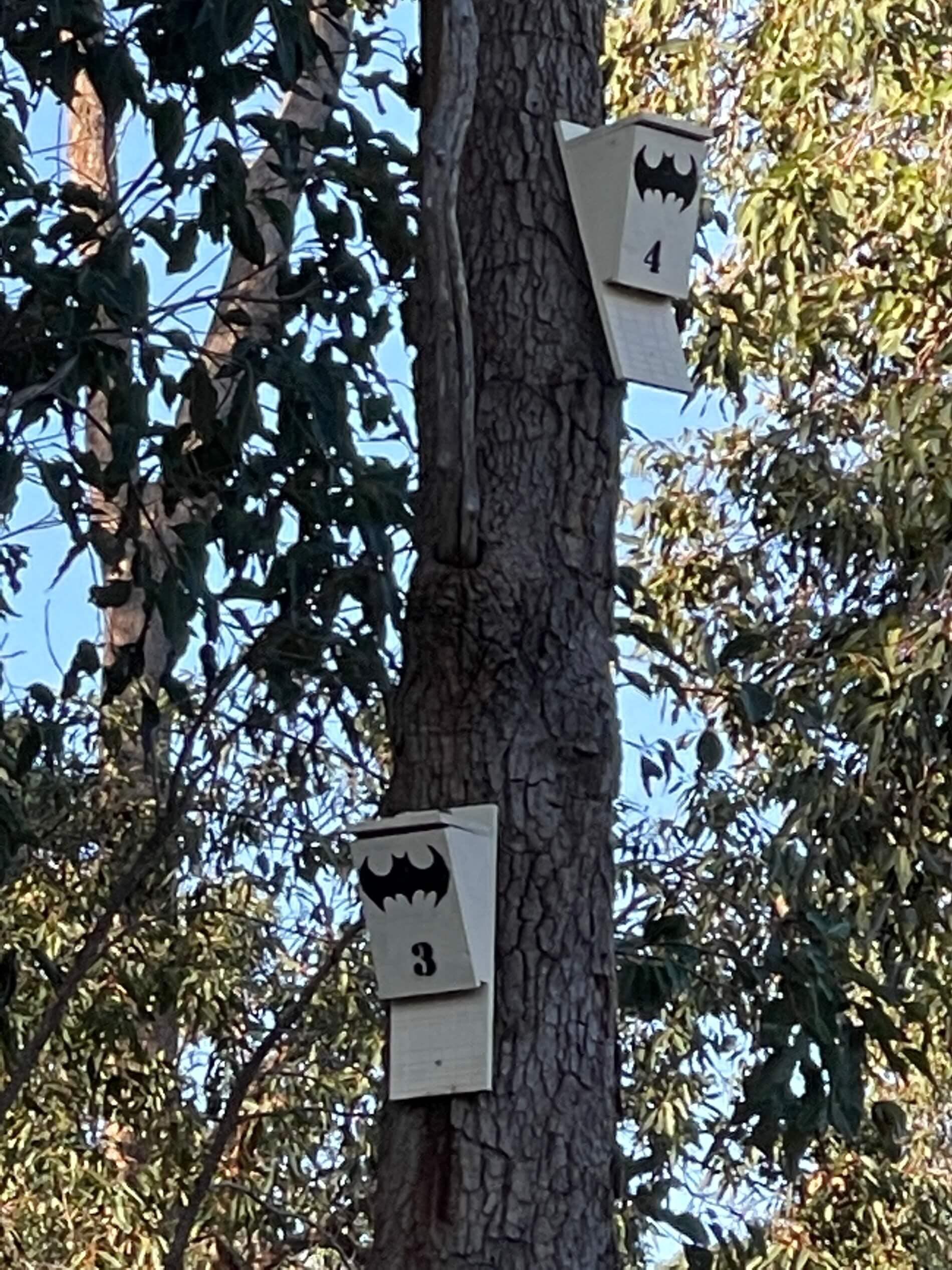 Microbat boxes located in Mundy Regional Park in Lesmurdie