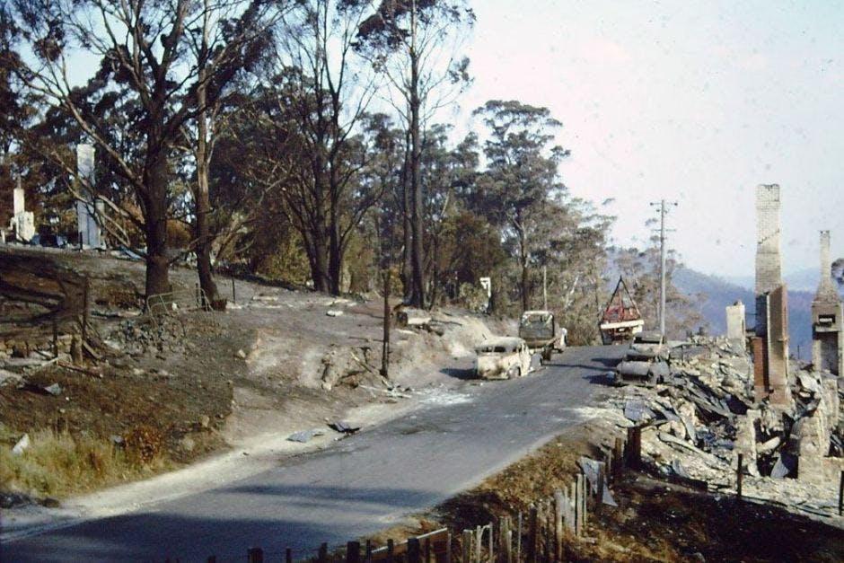Fern Tree, near Mt Wellington Road after 1967 bushfire