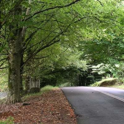 Street Tree example i