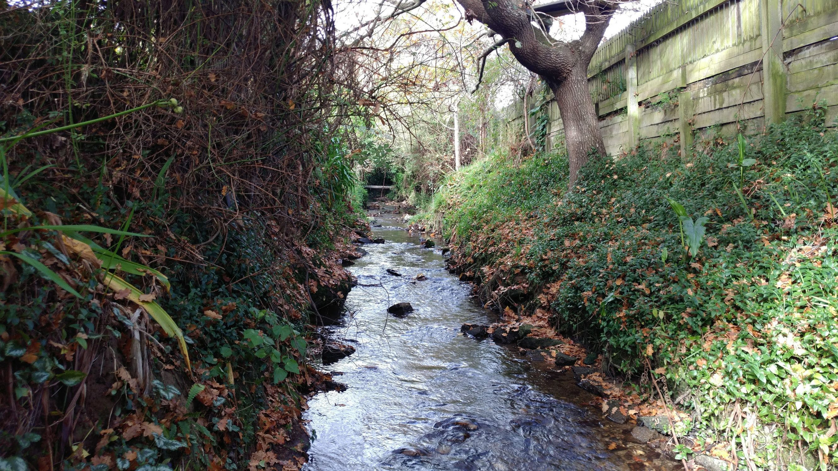 Pinehacven Stream behind 7 Deller Grove