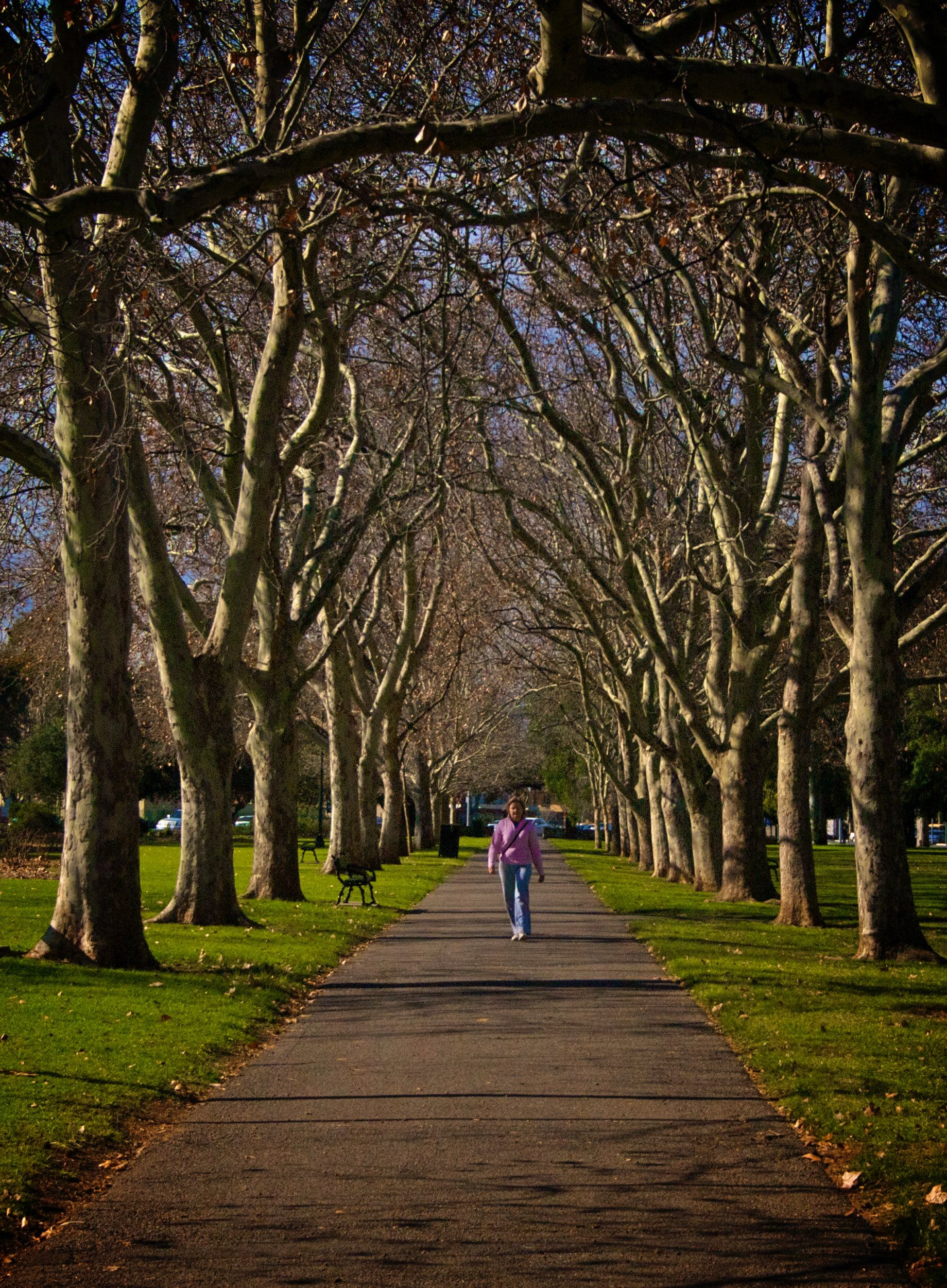 Tall tree avenues to be retained and strengthened
