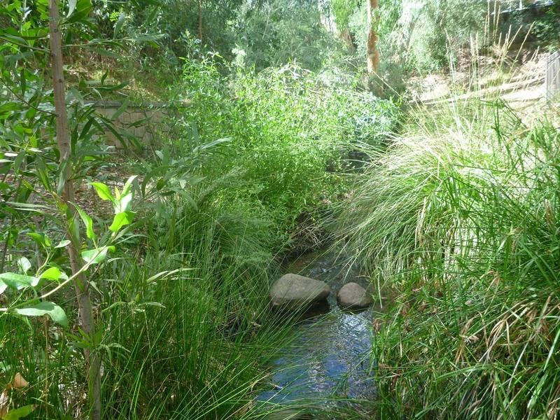 Restored creek line with good diverse plants