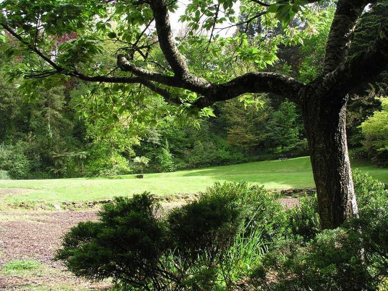 Kingsford Smith: Lawn area