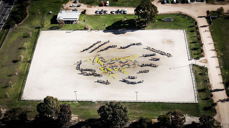 Over 400 students formed a giant mosaic of a Sloane's Froglet in Albury. Photo credit: S Cohen.