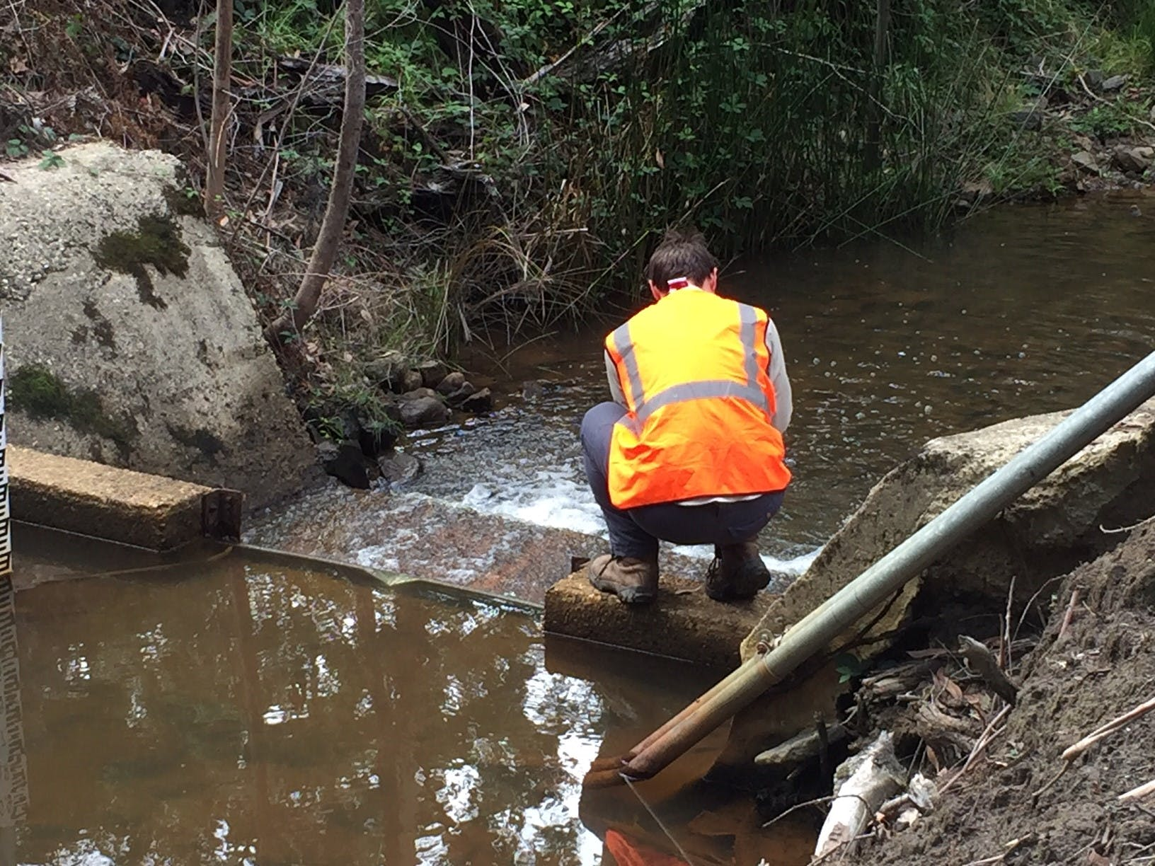 Platypus survey at Boundary Creek