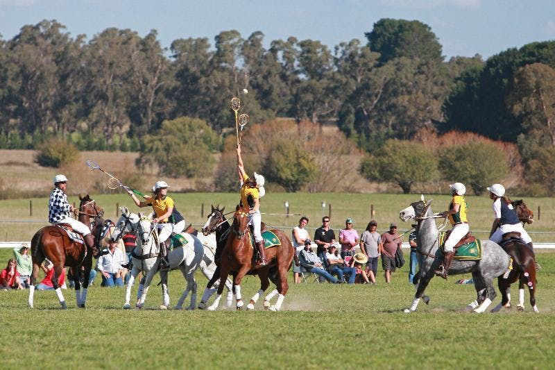 Polocrosse 02 Small