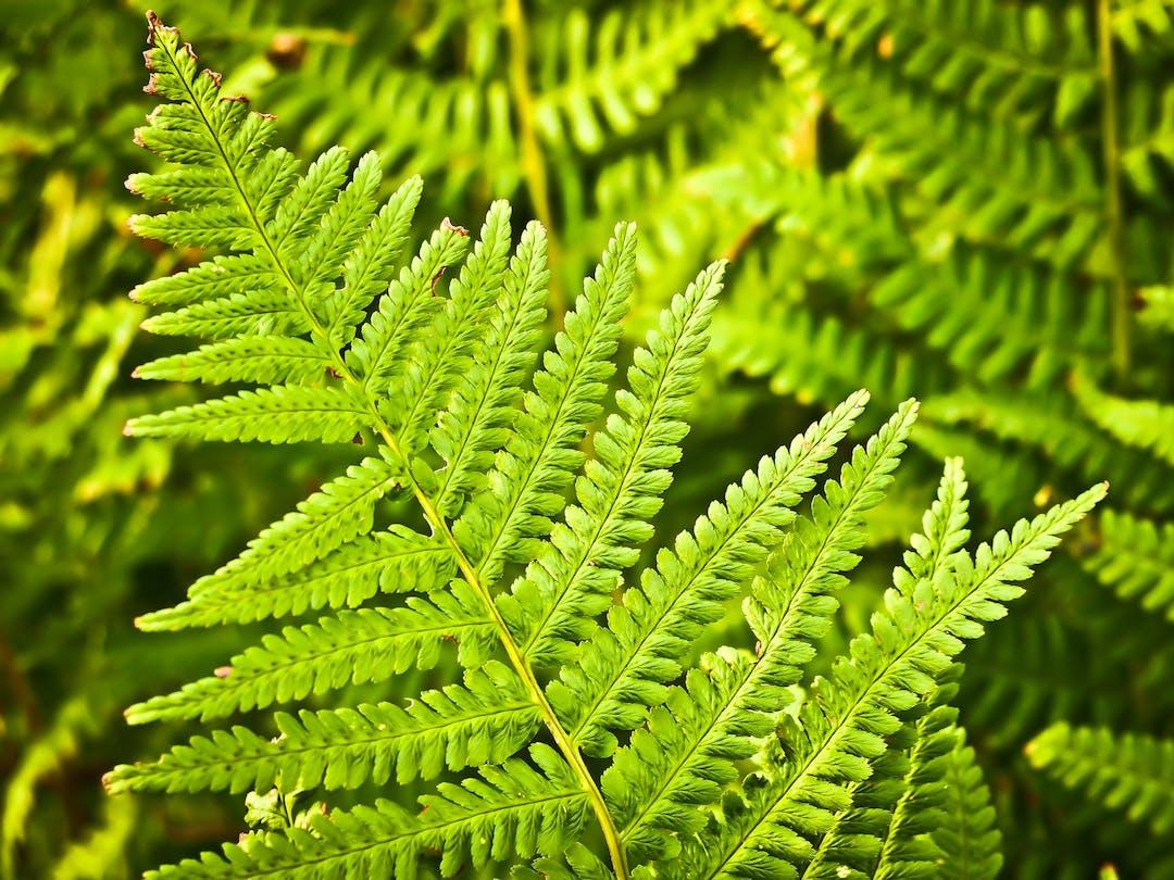Botany ecosystem flora 33328