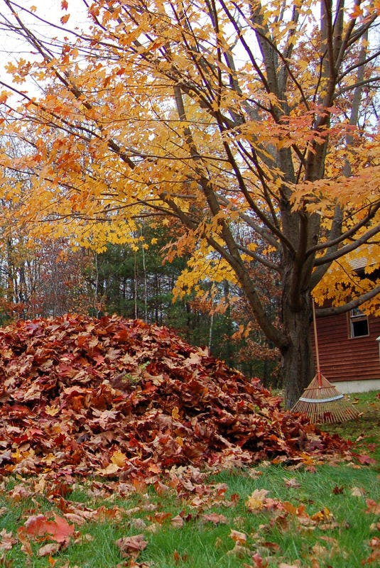 How do you manage piles of autumn leaves?