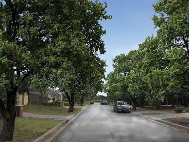Option F - Exotic Large Jacqui Terrace Quercus