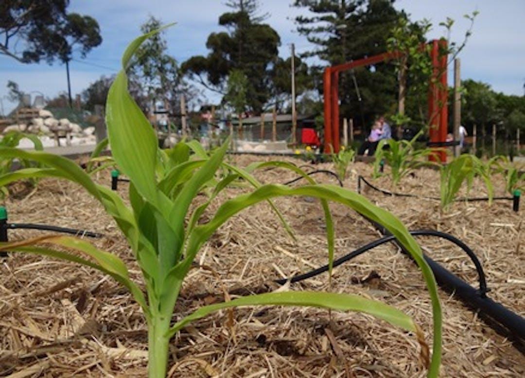 Public Consultation Draft Community Gardens Policy