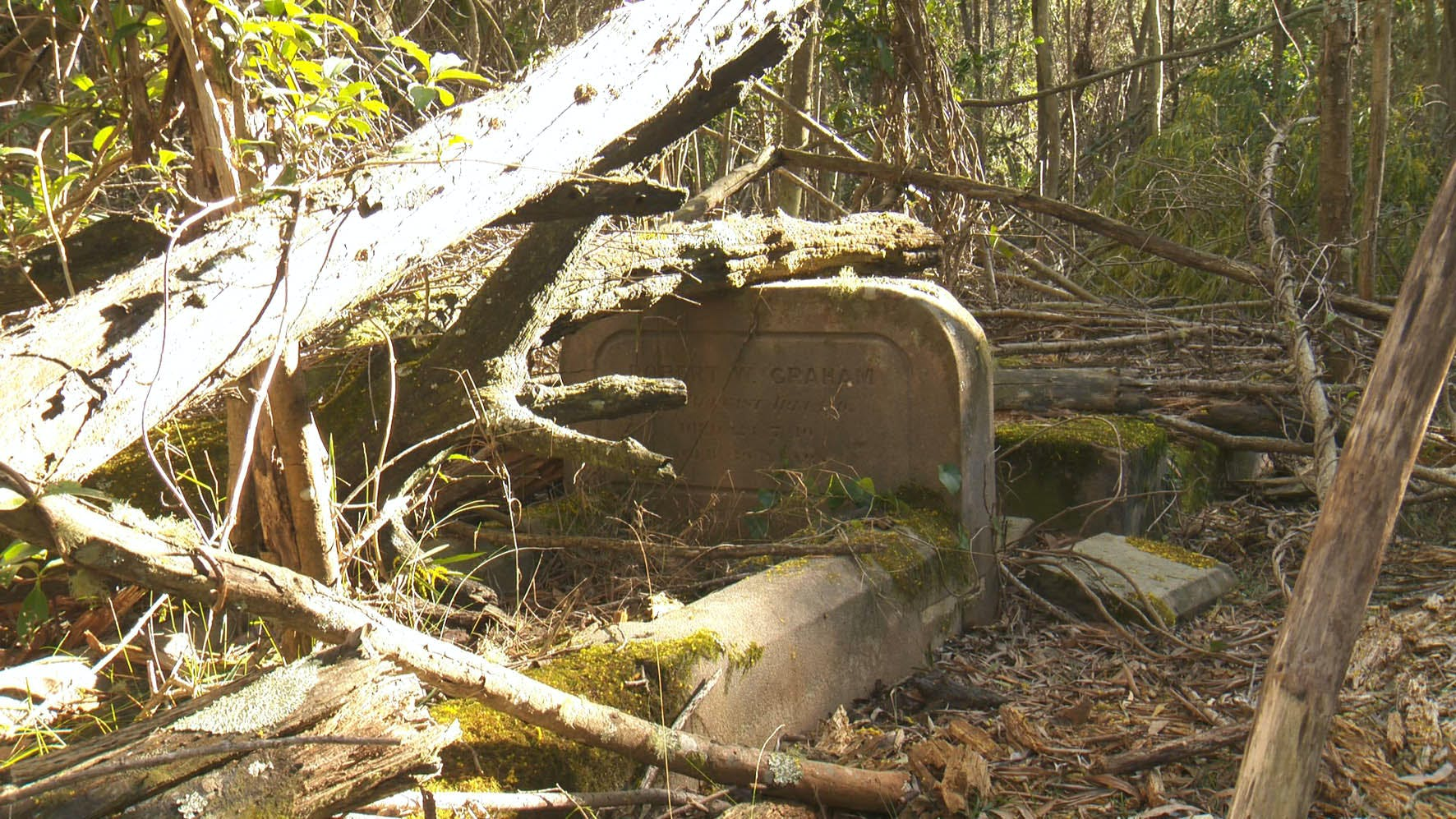 Headstone of Robert Graham with large fallen trees