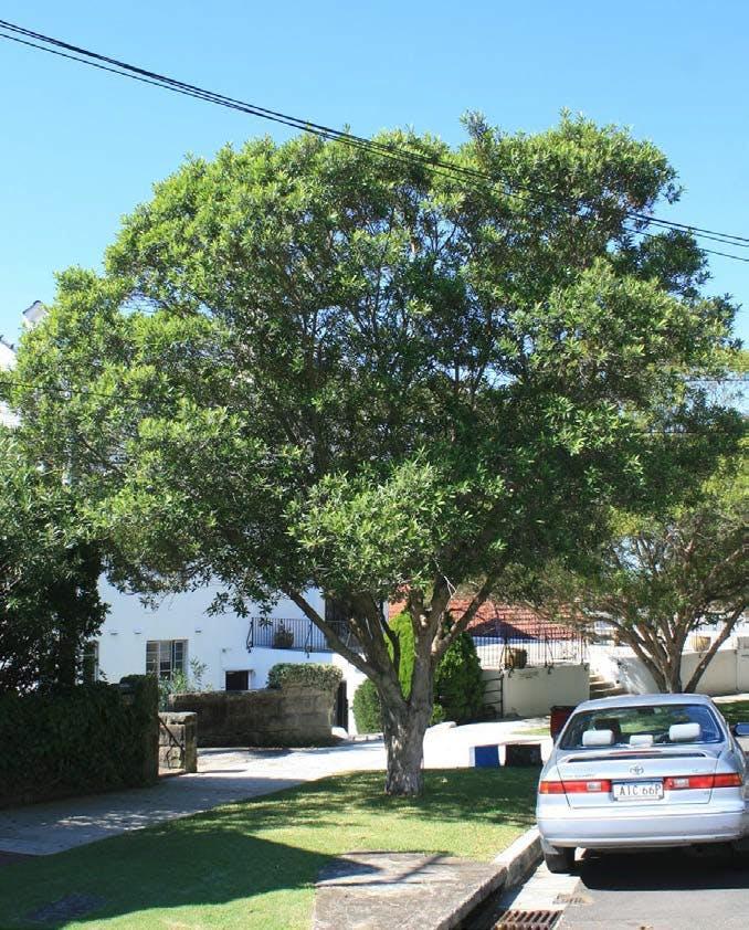 Fanning Street Tree Planting