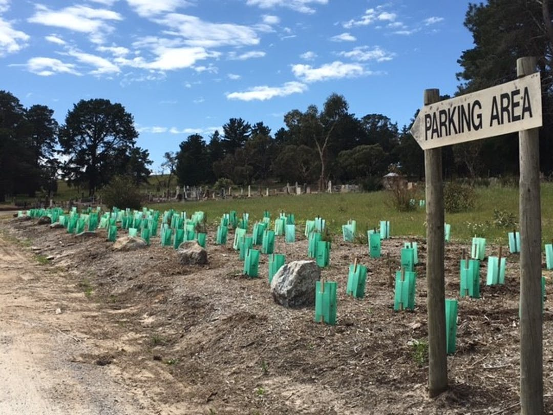 Gc cemetery entrance planting