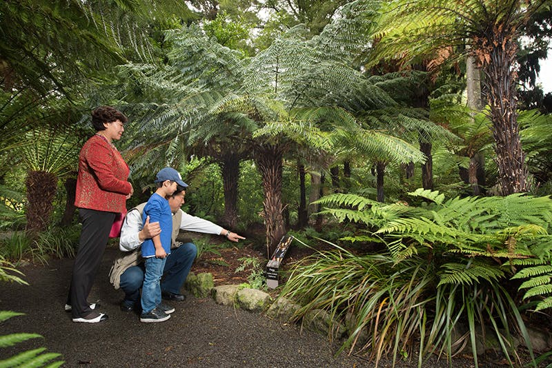 An Asian family looking at native New Zealand forest.