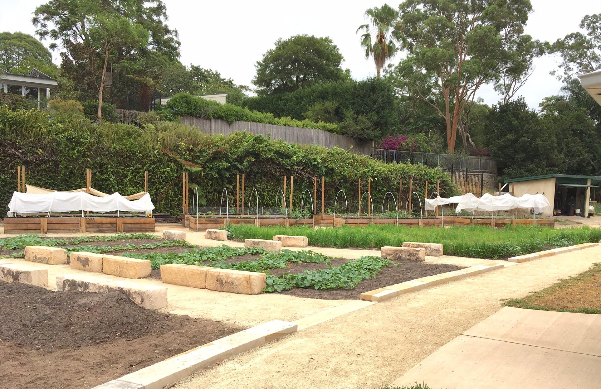 Artarmon Parklands - Community Garden