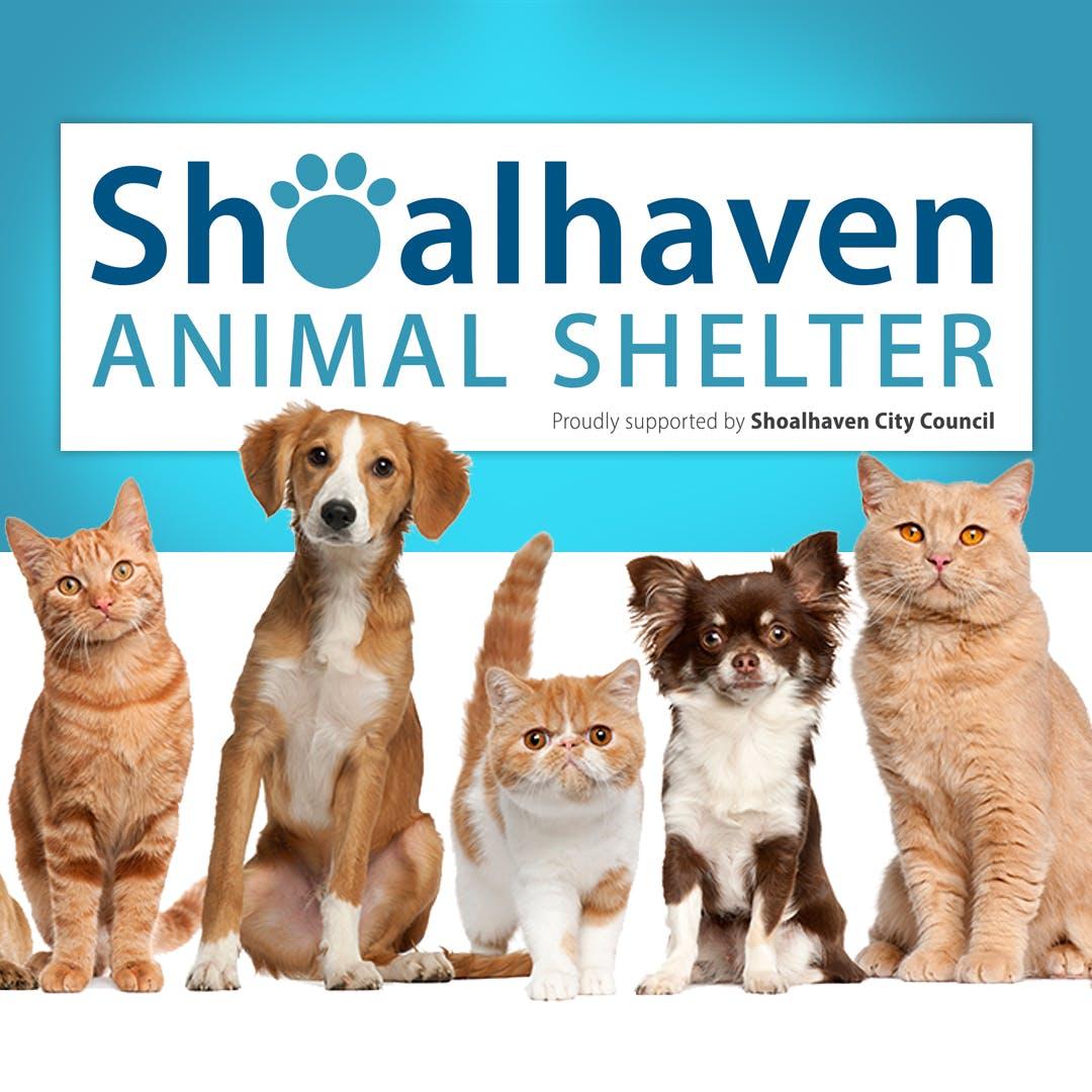 Shoalhaven Animal Shelter