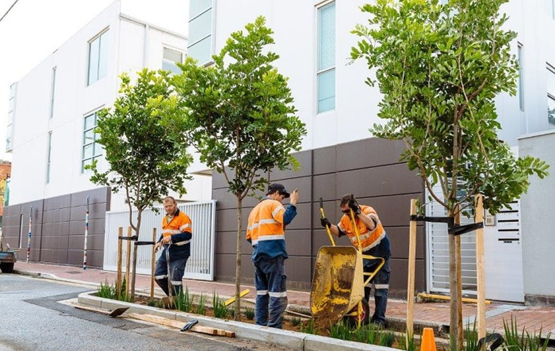 Three workmen planting trees as part of a street upgrade in Adelaide.