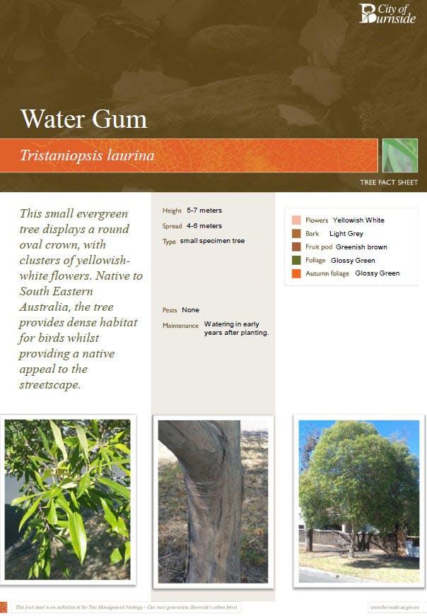 Water Gum