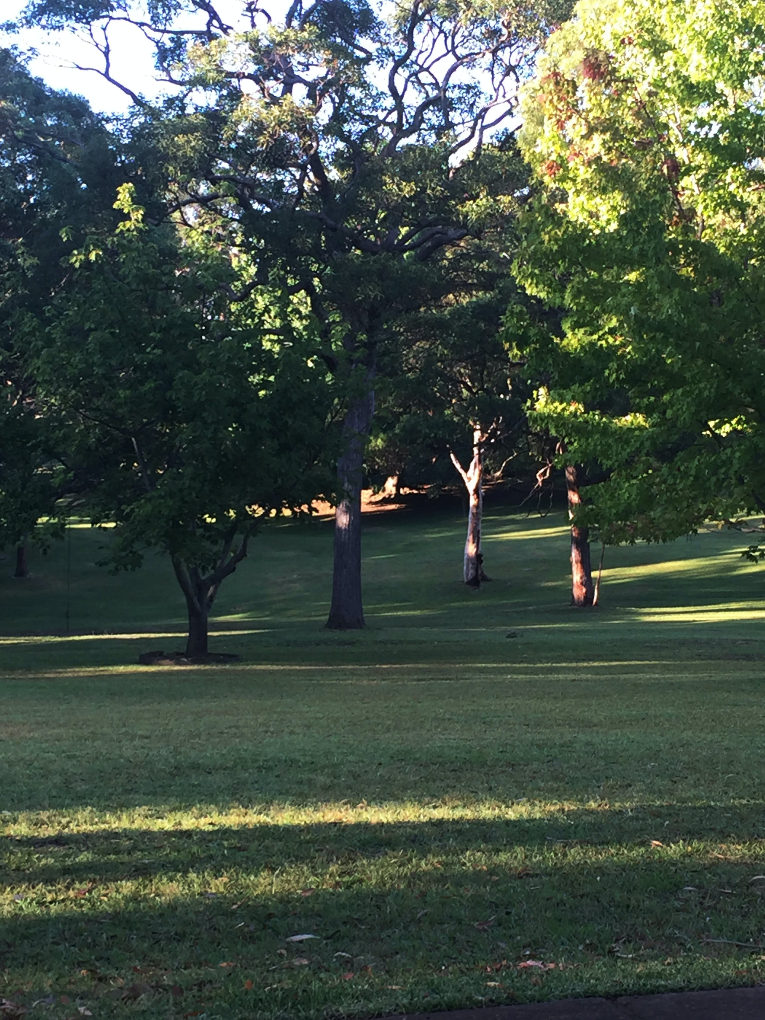 Early morning at Buttenshaw Park, Springwood, March 2016