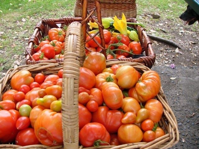 Harvest 1