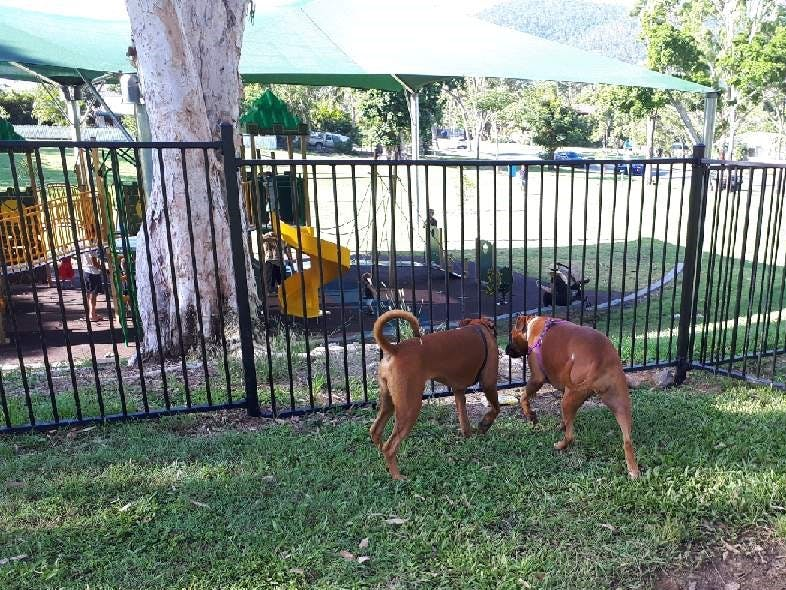 Wildlife Park - Dog Enclosure