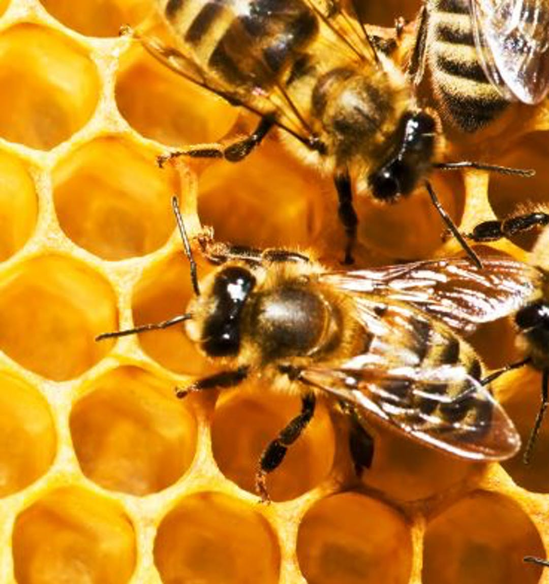 Bee hives in Hobart - amendment to the Health and Environmental Services By-Law