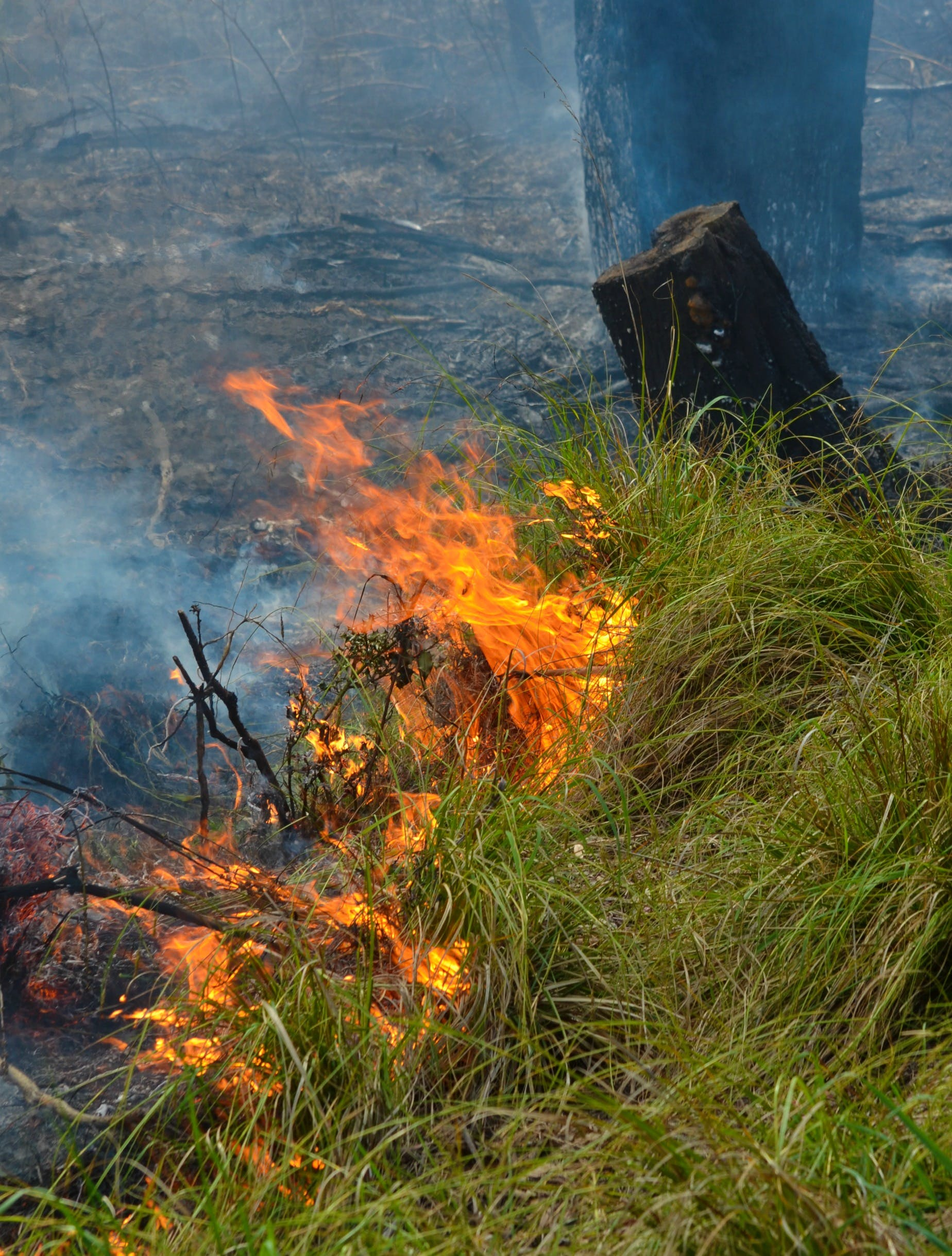 Controlled_Bushfire