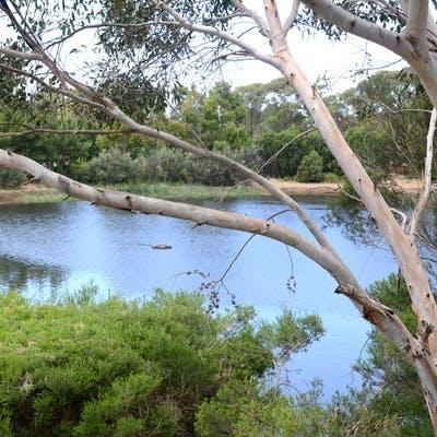 Cranbourne Lake