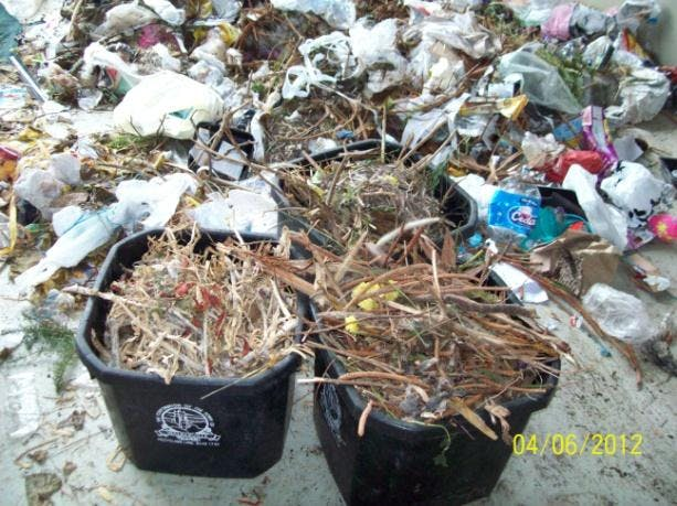 Greens contaminating general waste - from FRWA Waste Audit.